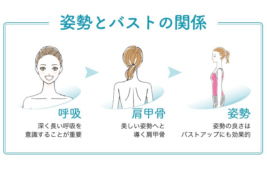 呼吸や肩甲骨を意識して姿勢を正せばバストアップに効果的